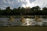 Three Tisza Mayflies (Palingenia Longicauda) Taking Off, Tisza River, Hungary, June 2009 Photographic Print by Radisics