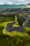 Algae Growing in a Pool on a Rock, Scarista Beach, South Harris, Outer Hebrides, Scotland, UK Photographic Print by  Muñoz