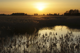 Reed Beds (Phragmites Sp), Joist Fen at Sunset, Lakenheath Fen Rspb Reserve, Suffolk, UK, May Photographic Print by Terry Whittaker