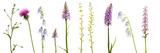 Meadow Flowers, Fleabane Thistle, Bearded Bellfower, Common Spotted Orchid, Twayblade, Austria Reproduction photographique par  Benvie