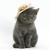 Grey Kitten Wearing a Straw Hat Photographic Print by Mark Taylor