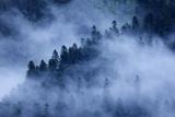 Mist Drifting over a Nordmann Fir (Abies Nordmanniana) Forest, Near Dombay, Caucasus, Russia Photographic Print by  Schandy