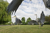 Three Grey Herons (Ardea Cinerea) Fighting in Regent's Park, London, UK, April 2011 Photographic Print by Terry Whittaker