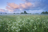 Wildflower Meadow at Dawn, Nemunas Delta, Lithuania, June 2009 Photographic Print by  Hamblin
