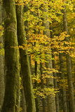 Autumn in Corkova Uvala with Silver Fir, European Beech and Spruce Trees, Plitvice Lakes Np,Croatia Photographic Print by  Biancarelli