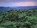View over Trees Towards Badlands at Sunset, Vashlovani National Park, Georgia, May 2008 Photographic Print by  Popp