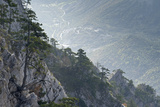 Bosnian Pines (Pinus Leucodermis) on Rocks, River in Valley Below, Pollino Np, Basilicata, Italy Photographic Print by  Müller
