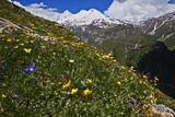 Alpine Meadow with Flowers, Mount Elbrus in the Distance, Caucasus, Russia, June 2008 Photographic Print by  Schandy