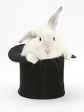 White Rabbit in a Black Top Hat Photographic Print by Mark Taylor