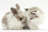 Colourpoint Kitten with Baby Rabbit Reproduction photographique par Mark Taylor