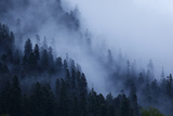 Mist Drifting over a Nordmann Fir (Abies Nordmanniana) Forest, Teberdinsky, Caucasus, Russia Photographic Print by  Schandy