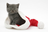 Grey Kitten in a Father Christmas Hat Photographic Print by Mark Taylor