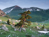 Bosnian Pine (Pinus Leucodermis - Heldreichii) in Rock Strewn Landscape, Pollino, Basilicata, Italy Photographic Print by  Müller