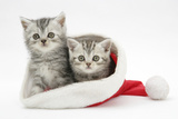 Two Tabby Kittens in a Father Christmas Hat Photographic Print by Mark Taylor
