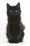 Fluffy Black Kitten, 9 Weeks Old, Sitting Photographic Print by Mark Taylor