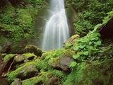 Waterfall, Mtirala National Park, Georgia, May 2008 Photographic Print by  Popp
