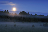Moon over the Kemeri National Park, Latvia, June 2009 Photographic Print by  López