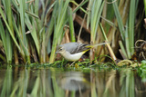 Grey Wagtail (Motacilla Cinerea) Amongst Vegetation, Kent, UK, February Photographic Print by Terry Whittaker