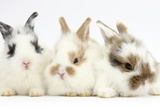 Three Cute Baby Bunnies Sitting Together Photographic Print by Mark Taylor