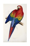 Red and Yellow Maccaw Giclée-Druck von Edward Lear
