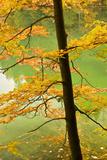 European Beech Tree (Fagus Sylvatica) by Proscansko Lake, Upper Lakes, Plitvice Lakes Np, Croatia Photographic Print by  Biancarelli