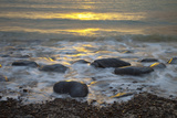 Sun Reflecting on Sea Surface with Rocks on Beach, Scotland, UK, June 2009 Photographic Print by  Muñoz