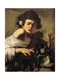 Boy Bitten by a Lizard Giclee Print by  Caravaggio