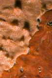 Rock Covered with Encrusting Sponge (Spirastrella Cunctatrix) and (Phorbas Tenacior), Monaco Photographic Print by  Banfi