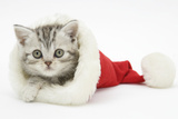 Tabby Kitten in a Father Christmas Hat Photographic Print by Mark Taylor