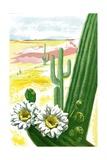 Blooming Saguaro Cactus in Desert Giclee Print