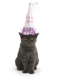 Grey Kitten Wearing a Party Hat Photographic Print by Mark Taylor