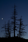 Dead Pine Trees with Moon Shining, Stuoc Peak, Durmitor Np, Montenegro, October 2008 Photographic Print by  Radisics