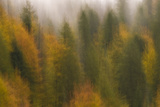 Soft Focus on Woodland with Silver Fir, Spruce and European Beeches, Plitvice Lakes Np, Croatia Photographic Print by  Biancarelli