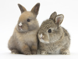 Two Baby Rabbits Photographie par Mark Taylor