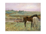 Horses in a Meadow Giclee Print by Edgar Degas