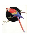 Red and Green Macaw Giclee Print