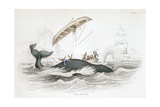 Whaling Boat Tossed by Greenland Whale Giclee Print
