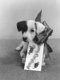 1940s Cute Gift Puppy Merry Christmas Bow and Tag Photographic Print