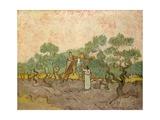 Women Picking Olives Giclée-Druck von Vincent van Gogh