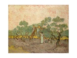 Women Picking Olives Giclee Print by Vincent van Gogh
