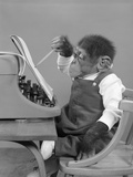 1950s Chimp in Overalls Sitting in Chair at Typewriter with Pencil and Steno Pad Photographic Print