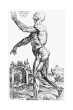 Muscles of the Human Body Giclée-Druck von Andreas Vesalius