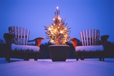 Small Christmas Tree Outdoors Photographic Print by Jim Craigmyle