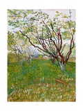 The Flowering Orchard Giclee Print by Vincent van Gogh