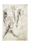 Study of a Dead Man Giclee Print by  Leonardo da Vinci