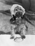 Dog Wearing Bonnet with Cup of Tea Fotografie-Druck