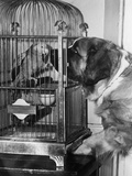 Dog Looking at Parrot in Cage Stampa fotografica