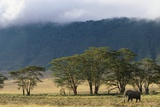 Elephant in Ngorongoro Crater Photographic Print by Paul Souders