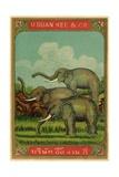 Thai Cotton Label with Elephants Giclee Print