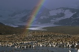 Rainbow over Large King Penguin Colony Photographic Print by Paul Souders
